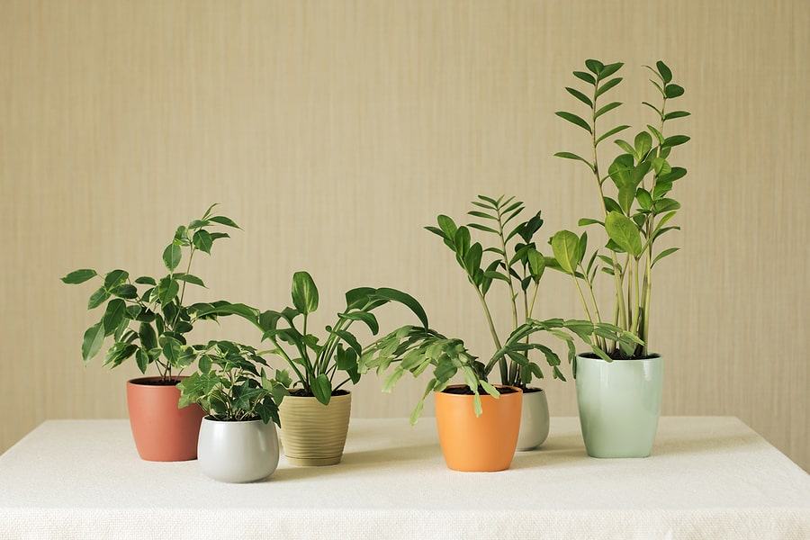 The Benefits of Having Plants in Your Apartment